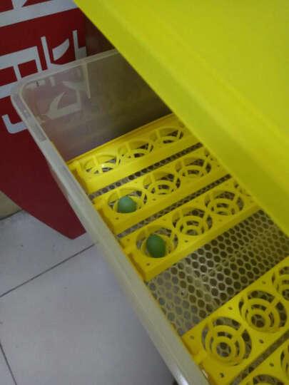 孵化器全自动孵化机家用小型鸡蛋孵化盒孵化箱 56枚双电源 晒单图