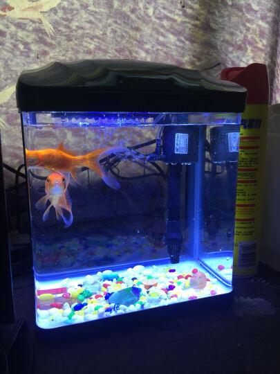 波奇网 森森鱼缸水族箱小型金鱼缸玻璃生态鱼缸 HR-230黑色 晒单图