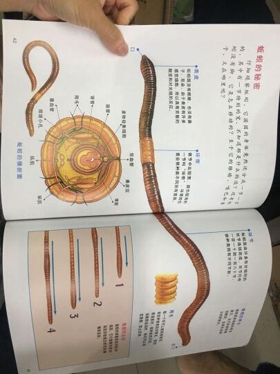 小牛顿科学馆系列全集 套装书(全套共60册) 晒单图