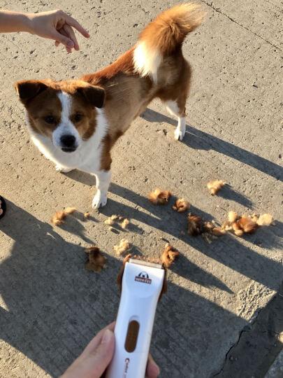 科德士(codos)宠物磨甲器犬猫指甲电动锉刀修甲器干电池式款 CP-3301 晒单图