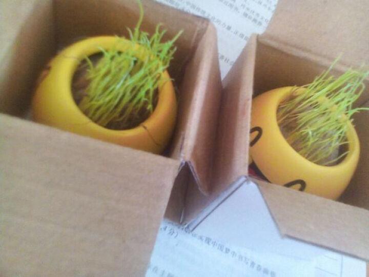 办公室DIY懒人盆栽 迷你草头娃娃 魔草盆栽 买4送浇水器水培绿植盆栽花卉 X恋人-亲亲 /陶瓷罐+种子 晒单图