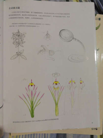 英国皇家植物园植物画教程+图谱·套装(套装共3册) 晒单图