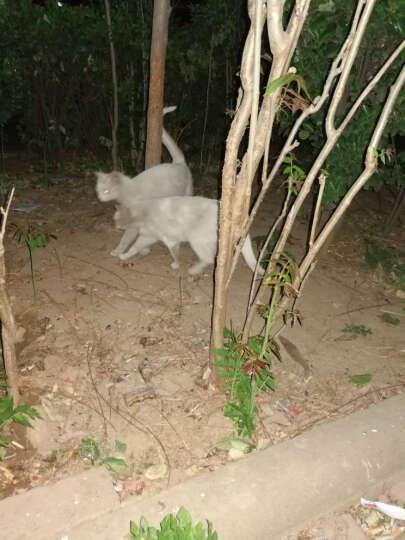 美滋元 宠物猫粮 三文鱼海藻幼猫猫粮500g 晒单图