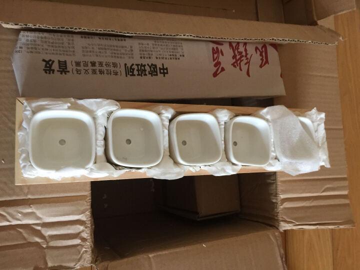 菜多美 多肉植物花盆创意肉肉简约多肉花盆白瓷盆多肉陶瓷盆器含托 10个BF05圆角1号四方花盆配10格木盒 含花盆含托盘 晒单图