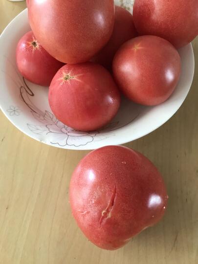 多利农庄 有机西红柿 番茄 约300g 新鲜蔬菜 晒单图