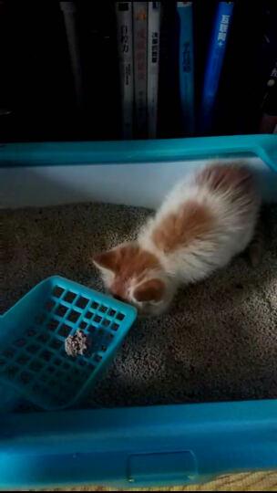 【京东超市】宠幸Chowsing 猫砂盆双层松木猫厕所 蓝色 晒单图