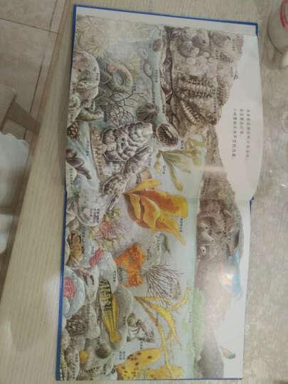 海边的动物 晒单图