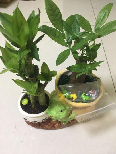 小蘑菇多肉微景观盆栽盆景摆件配件饰品 小黄鸭颜/1个 /1.8厘米*1.5厘米 晒单图