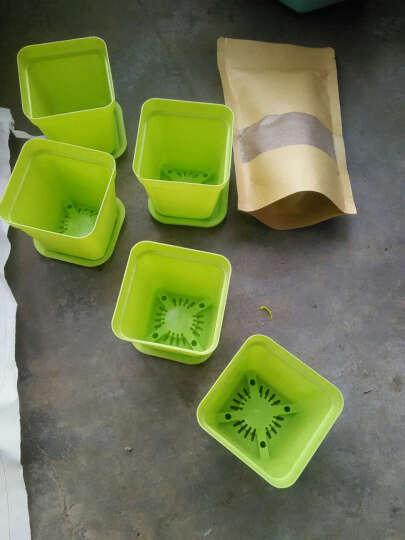 开心农场 24种多肉植物组合盆栽 防辐射花卉办公室内小盆景绿植花苗 U4 白鸟3株 晒单图