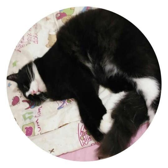尼鲁 成猫波斯猫宠物猫粮 (12个月以上) 2.5kg 晒单图