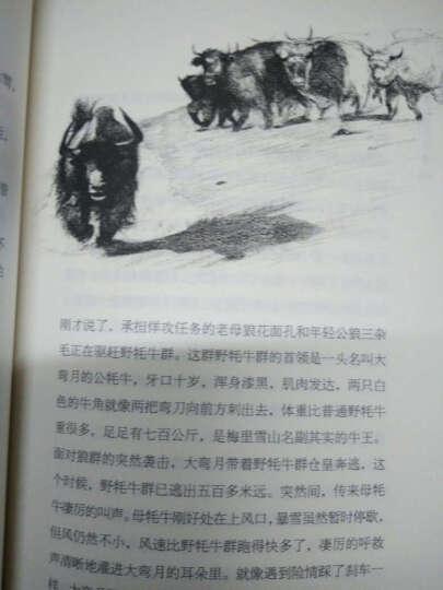 沈石溪作品 吃狼奶的羊 晒单图