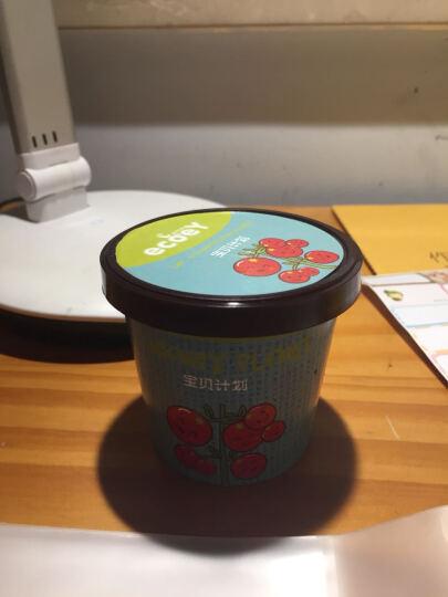 ECOEY 绿植盆栽 儿童动手创意迷你蔬菜水果DIY种植玩具宝贝计划小盆栽 宝贝计划-五彩椒 晒单图