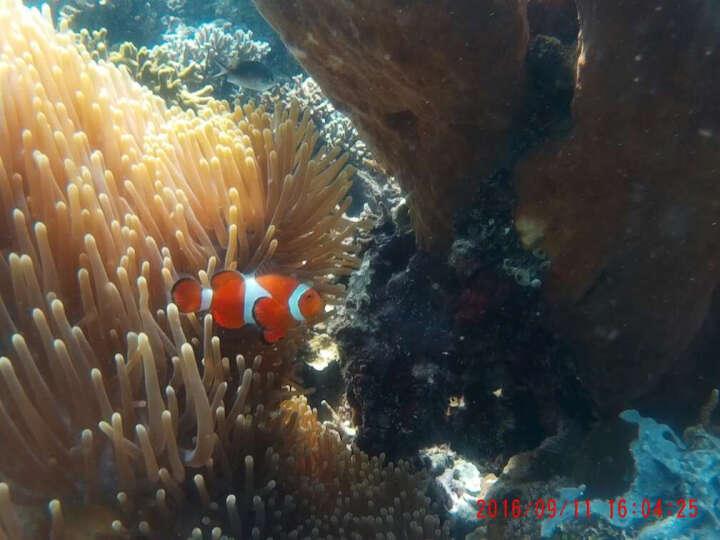 米狗M6运动相机水下高清摄像机防水骑行头戴相机DV户外航拍 标配+16G高速卡 晒单图