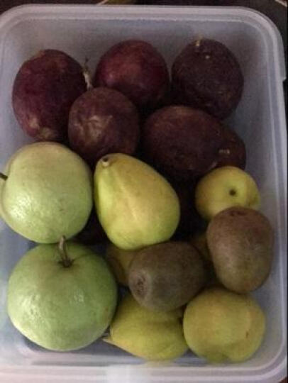 HAIXIN海兴冰箱保鲜盒塑料冷冻储物盒长方形鸡蛋水果食物收纳盒3层1盖 2组装蓝绿盖随机 晒单图