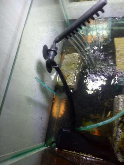 乌龟活体中华草龟宠物金线草龟 小草龟苗外塘水陆宠物龟活体 中华小草龟活体 背甲约2-3cm 1只 晒单图