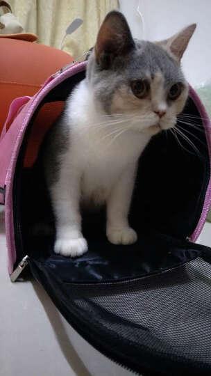 宠物猫包狗包猫袋狗狗猫咪背包单肩便携包外出多款式可折叠 粉色千鸟格 中号8斤内宠物 晒单图
