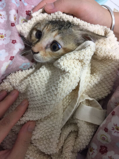 伟嘉 宠物猫粮猫湿粮 幼猫妙鲜包 妙鲜渔趣(金枪鱼+海洋鱼)六联包85g*6 晒单图