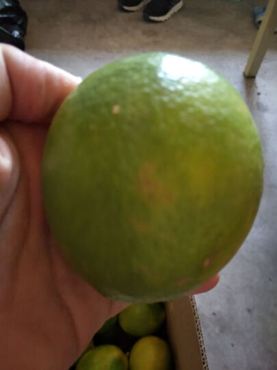 广西小青柠檬2.5kg 越南进口品种国内种植 广西特产新鲜时令水果 皮薄汁多 晒单图