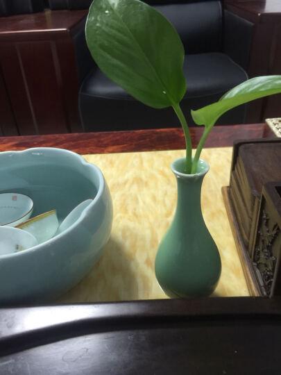萌碎陶瓷花瓶摆件客厅插花创意简约花器水培小花瓶瓷器陶瓷摆件青瓷花瓶陶瓷台面花瓶花器花瓶花艺 小观音瓶 弟窑梅子青 晒单图