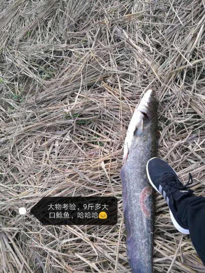 太平洋鱼竿 汉神鲤超硬碳素台钓竿28调性黑坑罗非手杆垂钓渔具 4.8米+礼包 晒单图