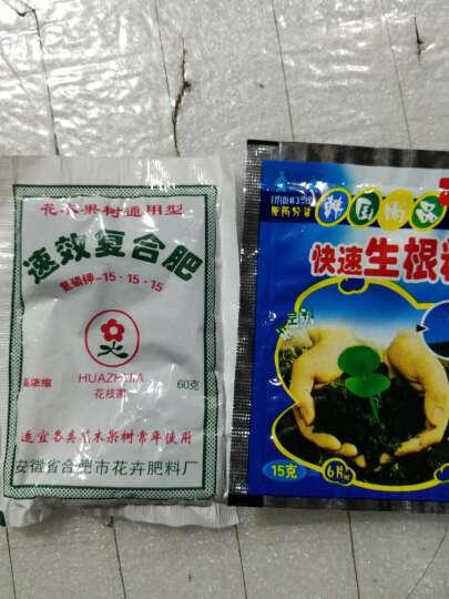 逍遥蔬菜种子四季播阳台种菜套餐青菜水果香菜籽种子 红心萝卜50粒 木耳菜30粒 晒单图