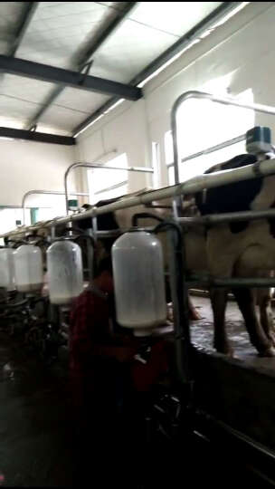 英美尔(YINGMEIER) 英美尔 牛饲料预混料肉牛育肥期肉牛添加剂快速催肥增重牛上膘 多奶宝 1袋 晒单图