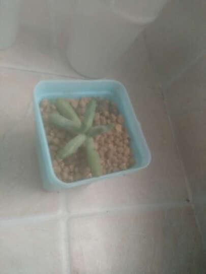 营养土  椰砖 多肉铺面  赤玉土 鹿沼土 陶土粒 白玉石 绿沸石 黑金沙  200g 椰转 晒单图