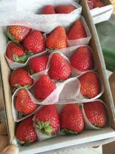 顺丰现货 新鲜奶油草莓3盒装约2.4斤  大草莓 奶油味草梅  晒单图