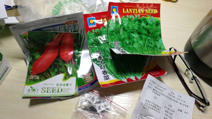 成品袋装蔬菜种子阳台庭院盆栽水果草莓辣椒番茄黄瓜西红柿籽小葱 大叶木耳菜 晒单图