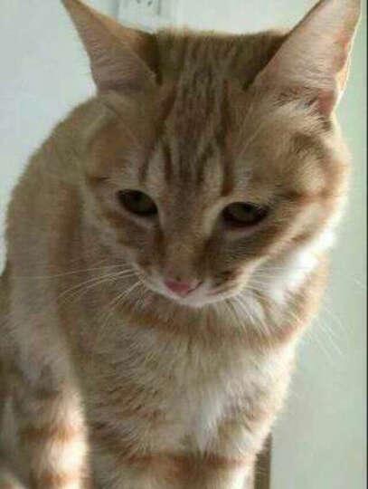 奥丁 宠物猫粮 成猫 天然粮10kg 牛肉味 晒单图