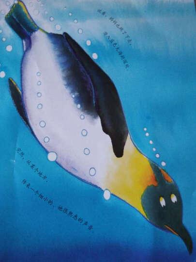 勇敢些,小企鹅 晒单图