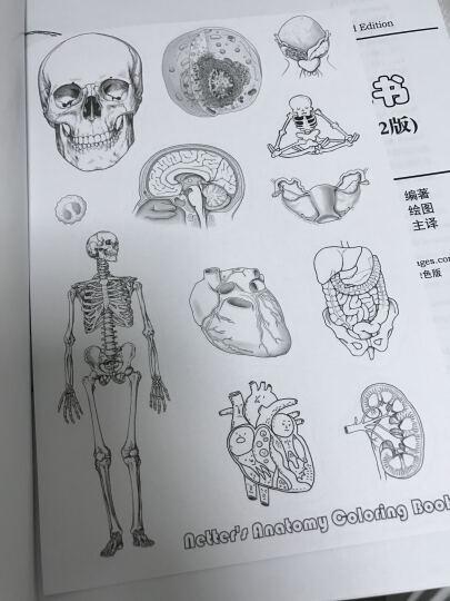 奈特解剖涂色书(第二版) 晒单图