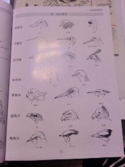 线描轻松学(套装共4册) 晒单图