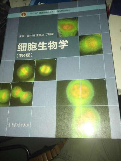 细胞生物学+细胞生物学 辅导与习题集 第四版 翟中和 北京大学 考研教材 高等教育 晒单图