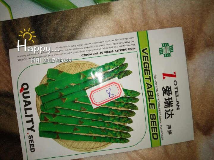 食用蔬菜 芦笋种子 结球菊苣种子 芥蓝种子 四粒红花生 晒单图