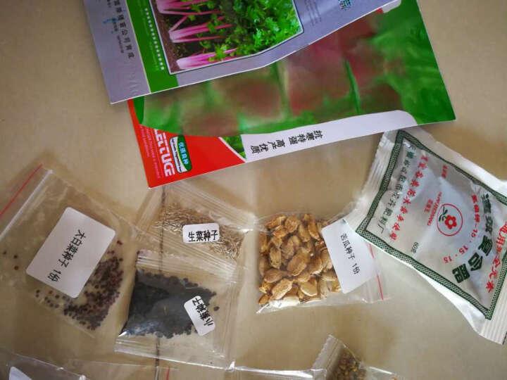 永赐(yongci) 永赐种子 蔬菜种子等套餐 易种阳台种菜 庭院蔬果菜籽春夏秋四季播种 无架豆种子 约20粒 晒单图