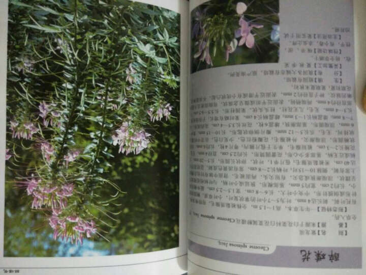 中国药用植物第二辑(套装6-10册) 晒单图