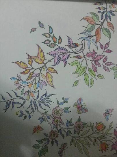 德国施德楼(STAEDTLER)水溶性彩铅笔彩色铅笔36色涂色填色彩笔绘画笔套装13710C36(赠画笔) 晒单图