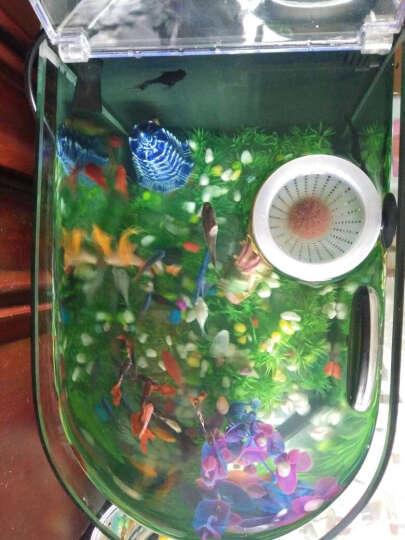喜高 子弹头创意桌面鱼缸办公家用客厅小型生态鱼缸玻璃鱼缸水族箱懒人鱼缸 子弹头48CM黑色保温套餐 晒单图