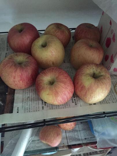 寻真 山东烟台栖霞红富士苹果 小果12个 约2.5kg 新鲜水果 晒单图