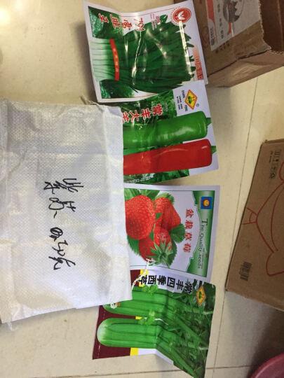 木耳菜种子胡萝卜种子茴香种子西红柿种子庭院阳台盆栽种子四季播种 葡萄种子 100粒 晒单图