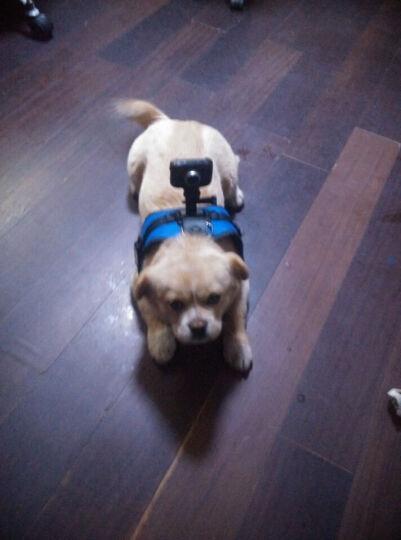 GoPro Hero6 5/4/3+狗6狗5狗4宠物 狗狗胸带 背带肩带 相机固定胸带 蓝色/GA153狗带 晒单图