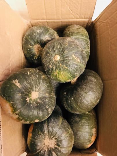 【临朐农特产馆】贝贝小南瓜 迷你嫩青南瓜板栗味窝瓜新鲜蔬菜 5kg 晒单图