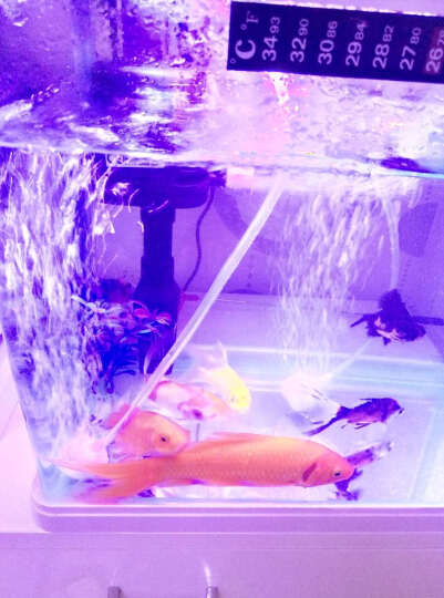 森森(SUNSUN)鱼缸静音钓鱼氧气泵水族箱冲氧泵锂电池增氧泵交直流两用USB车载户外气泵 CP-202 晒单图