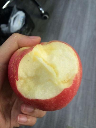 洛川苹果 陕西红星粉面苹果  新鲜苹果水果 礼盒装  晒单图