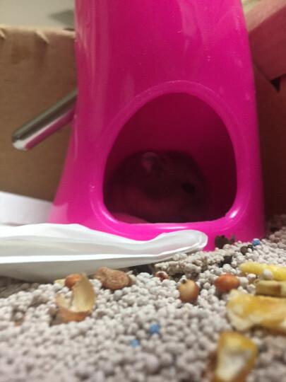 仓鼠可爱金丝熊居住饮水器两用套装不锈钢水壶喝水用品饮水器带支 晒单图