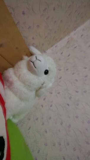 primere绵羊布娃娃大号公仔毛绒玩具羊年礼物生日女生情人节玩偶 儿童礼物 洋娃娃布偶 咖啡色 3号35*35cm塑料袋包装 晒单图