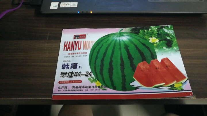 菠菜种子毛豆种子茴香种子木耳菜种子苦瓜种子菜种子 葡萄种子 100粒 晒单图