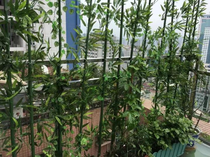 春之梦高仿真竹子 假竹子装饰 造景绿植仿真竹子隔断屏风装饰加密毛竹 4米升级款(过胶叶) 晒单图