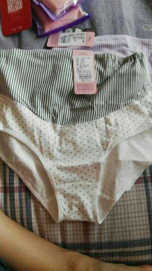 婧麒 孕妇内裤孕妇内衣高腰托腹内裤纯棉可调节四季 香芋紫 XL 晒单图